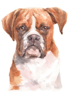 Watercolor painting of boxer