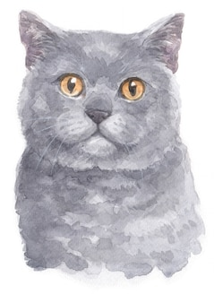 Watercolor painting of british shorthair