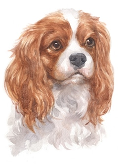 Watercolor painting of cavalier king charles spaniel