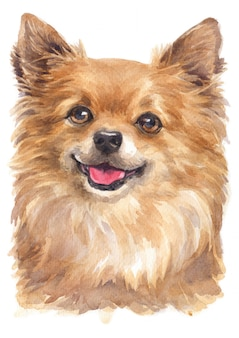 Watercolor painting of chihuahua