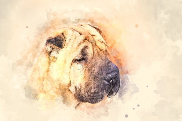Watercolor painting of a cute wrinkled snout of the shar pei