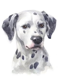 Watercolor painting of dalmatian