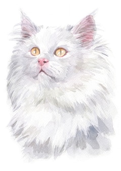 Watercolor painting of deutsch langhaar katzen