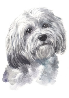 Watercolor painting of dog breed havaneses