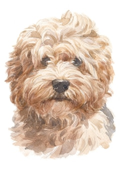 Watercolor painting, doggy style, light brown shag, havanese varieties