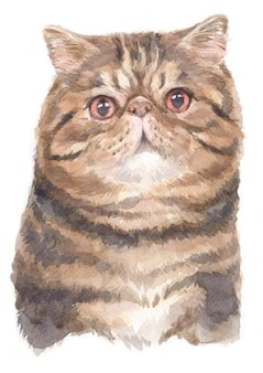 Watercolor painting of exotic shorthair