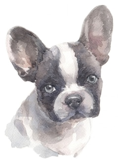 Watercolor painting of french bulldog