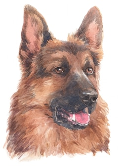Watercolor painting of german german shepherd
