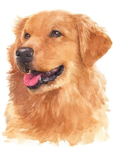 Watercolor painting of golden retriever