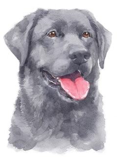 Watercolor painting of labrador retriever