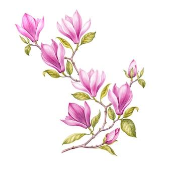 Watercolor painting magnolia blooming flower.