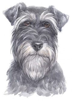 Watercolor painting of miniature schnauzer