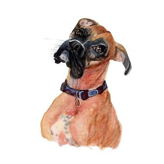 ボクサー犬の水彩画