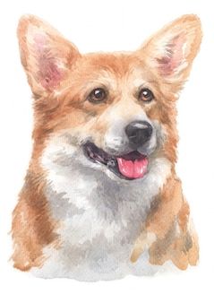 Watercolor painting of pembroke welsh corgi