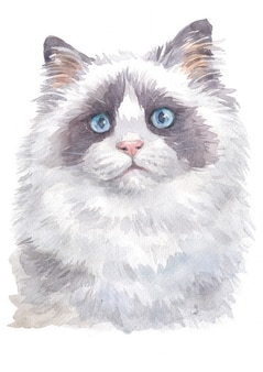 Watercolor painting of ragdoll