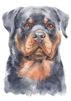 Watercolor painting of rottweiler dog