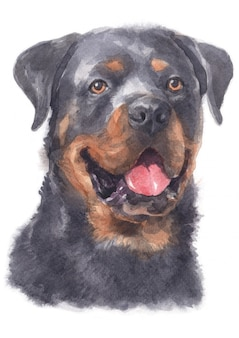 Watercolor painting of rottweiler