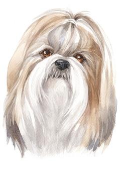 Watercolor painting of shih tzu