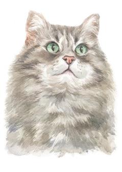 Watercolor painting of siberian