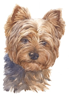 Watercolor painting of small dogs, brown feathers, yorkshire terrier