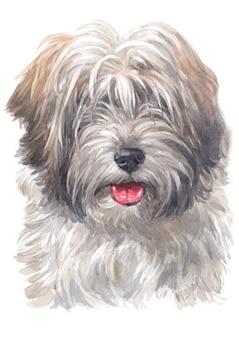 Watercolor painting of tibetan terrier