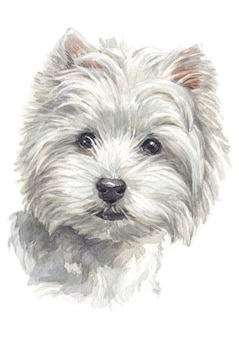 Watercolor painting of west highland white terrier
