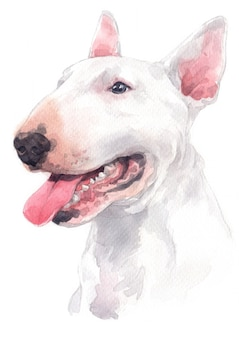 Watercolor painting, white dog breed, bull terrier