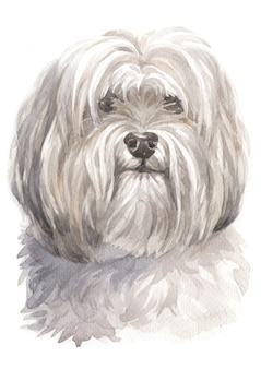 Watercolor painting, white dog