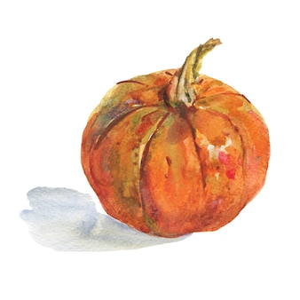 Watercolor painting whole pumpkin isolated hand drawn vegetable illustration