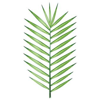 Watercolor palm branch