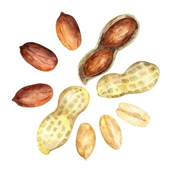 水彩ピーナッツ