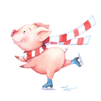 Watercolor pig in a scarf on skates.