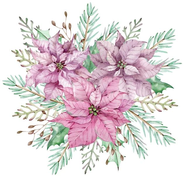 Акварель розовые и фиолетовые цветы пуансеттии с ветвями сосны и можжевельника. рождественский букет.