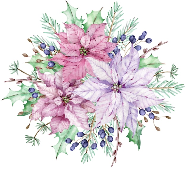 Акварель розовые и фиолетовые цветы пуансеттии с сосновыми ветками и синими ягодами. рождественский букет.