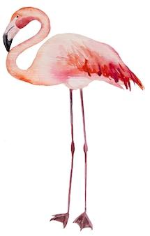 수채화 핑크 플라밍고입니다. 결혼식 문구, 인사말, 벽지, 패션, 포스터에 대한 이국적인 새 격리 그림