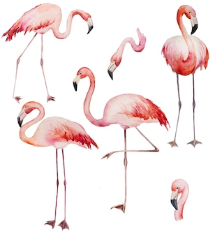Watercolor pink flamingoes. exotic birds isolated illustration for wedding stationary, greetings, wallpaper, fashion, posters