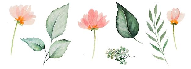 수채화 핑크 꽃과 녹색 잎 그림 세트 절연