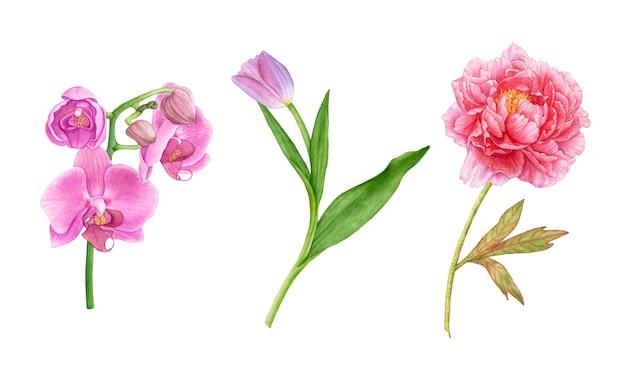 흰색 바탕에 수채화 핑크 꽃입니다. 분홍색 모란, 튤립, 난초.