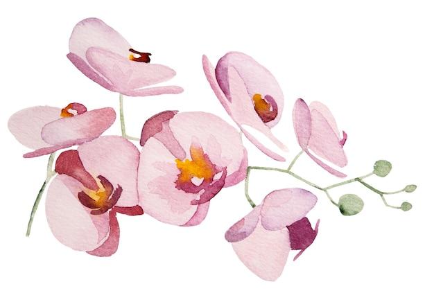 수채화 분홍색 난초 열 대 꽃 일러스트 절연