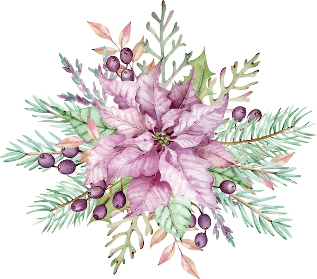 Watercolor pink poinsettia flower with green leaves, pine branches and berries. christmas composition. new year's floral card. hand-drawn illustration isolated on the white background.