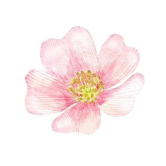 水彩ピンクのローズヒップの花