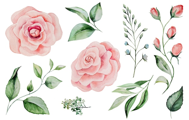 Watercolor pink roses and green leaves illustrations isolated