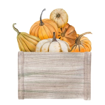 Акварельные тыквы в коробке, набор иллюстраций хэллоуина, урожай, элементы дизайна осени благодарения, осень, праздник картинки, изолированные на белом фоне.