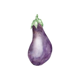 水彩紫茄子