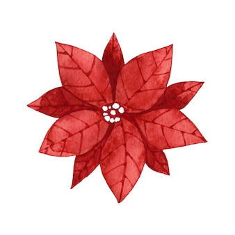 Акварель красный цветок пуансеттия картинки.