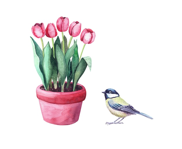냄비와 젖꼭지 새에 수채화 빨간 튤립. 동물이 있는 정원에 있는 집 식물. 흰색 배경에 고립 된 그림