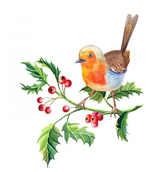 Watercolor robin bird. new year illustration. watercolour merry christmas card.
