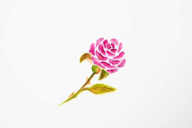 Primo piano del disegno della rosa dell'acquerello