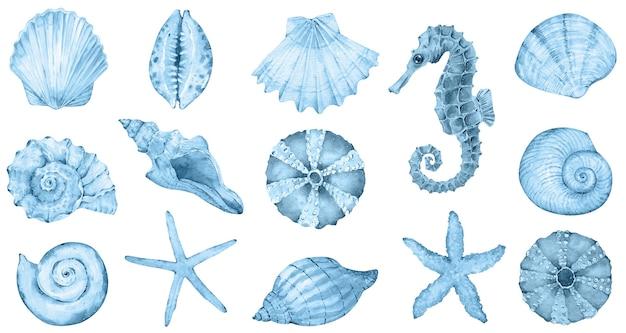 Акварель морская коллекция синие ракушки морской конек морская звезда