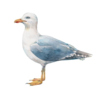 Акварельная чайка, изолированные на белом фоне.